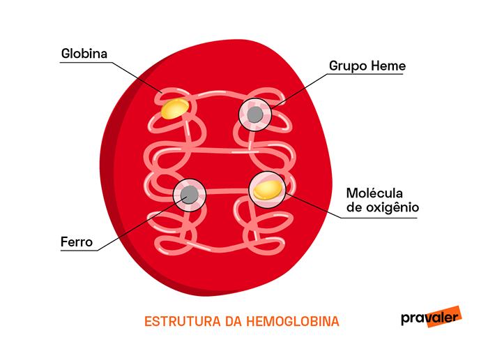 Estrutura da Hemoglobina
