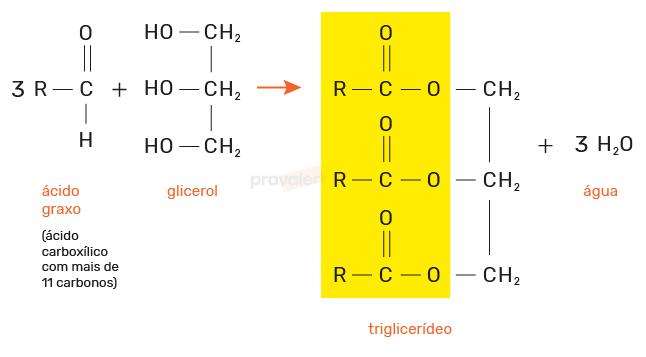 formação de um triglicerídeo